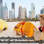 Camel Ride on Dubai Beach